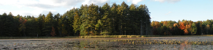 The trees on the edge of this wetland are just starting to turn colors with the fall season.