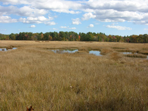 A scenic panorama of a salt marsh.