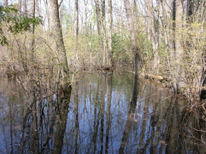 A vernal pool during spring high water.
